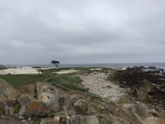 Pacific Grove | Golf lungo la 17 miles