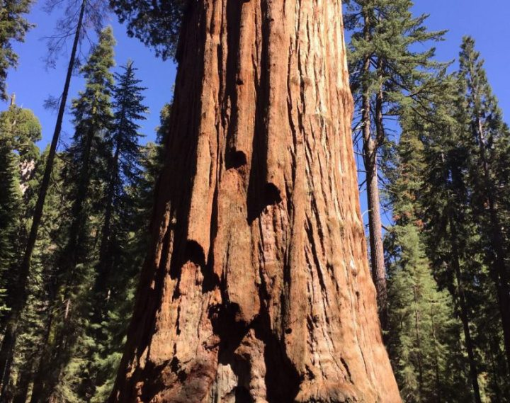 Generale Sherman | Sequoia National Park