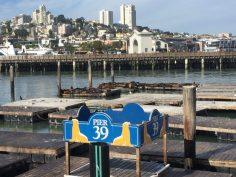 S.Francisco | I leoni marini del molo 39