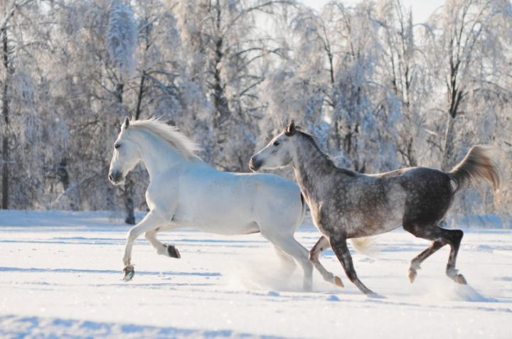 Alberta a cavallo | Photo credit Dreamstime