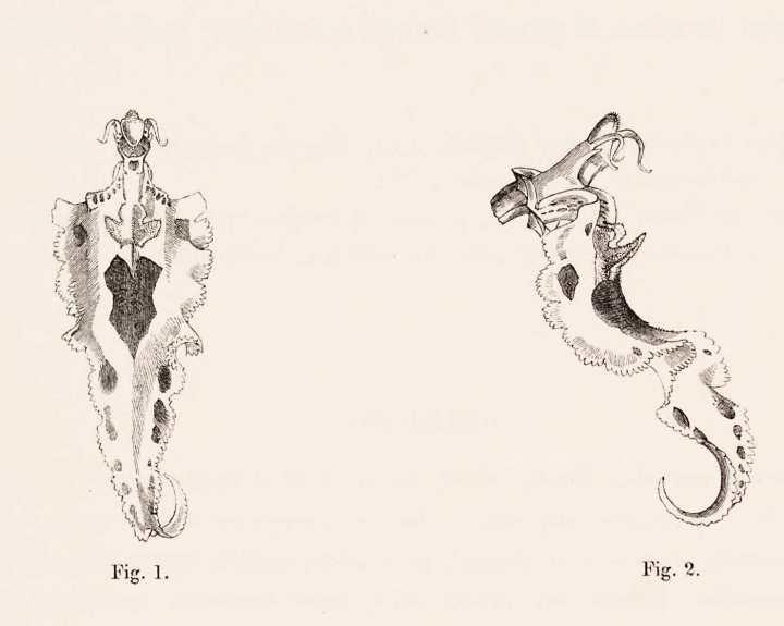 3 libri per 3 grandi passioni: unicorni, piante da interno ewok