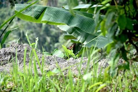 Camphuan Ridge Walk - Ubud _farfalla