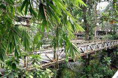 Camphuan Ridge Walk - Ubud_bridge