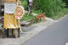 Camphuan Ridge Walk - Ubud_cane_casa